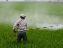 pesticides toxiques