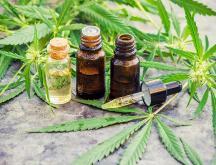 1re conférence internationale sur le cannabis médical du 22 au 24 octobre