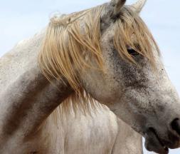 Le ministère dément l'octroi d'aides aux chevaux