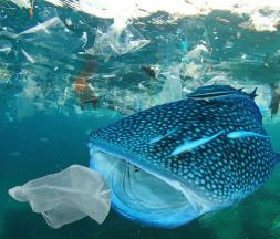 Pollution des plastiques