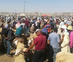 Souks aux moutons à Taourirt