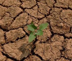 sécheresse maroc