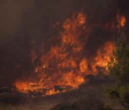 Des feux de forêt dans un canyon du sud de la Californie © REUTERS