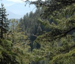 Forêts du Maroc