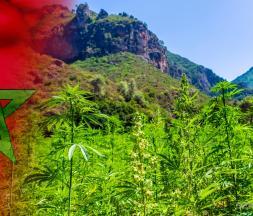 Champs de cannabis au Maroc © DR