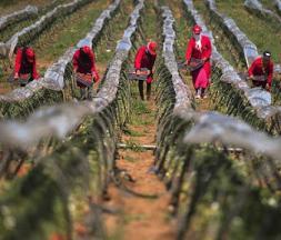 La campagne agricole 2020-2021 s'annonce très bien © DR