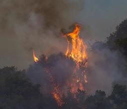 Italie : des feux de forêt ravagent la Sardaigne