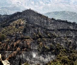 Des arbres calcinés sont photographiés après un incendie de forêt dans les collines boisées de la région de Kabylie, à l'est de la capitale algérienne Alger, le 11 août 2021 © AFP