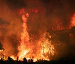 Un feu de forêt dans la région de Chefchaouen, le 15 août 2021 dans le nord du Maroc © AFP