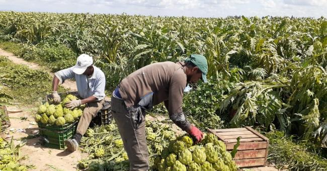 le secteur agricole poursuit son activité