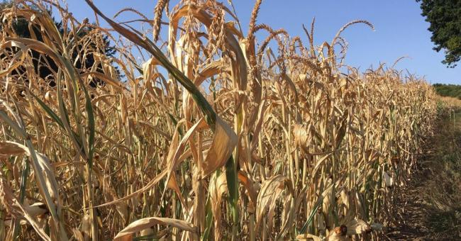 Casablanca-Settat : la sècheresse fait pression sur les agriculteurs de la région
