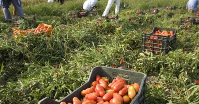 agriculture italie