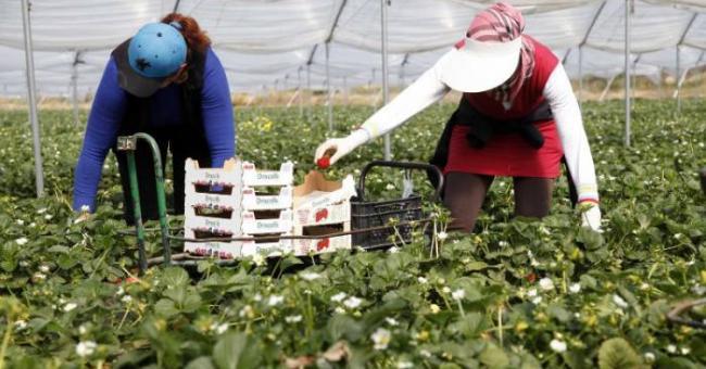 L'Espagne régularise d'anciens mineurs marocains