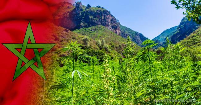 Cannabis : vers une légalisation de cette plante au Maroc ?