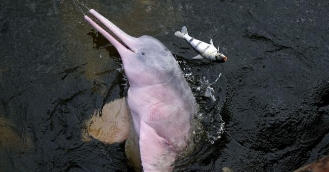 31 espèces éteintes et 3.324 menacées d'extinction