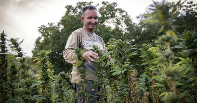 La légalisation du cannabis à usage médical serait bénéfique au royaume © DR