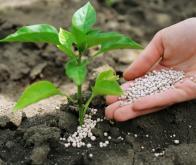OCP-Nigéria : accélération de la réalisation d'une usine d'engrais et d'ammoniaque