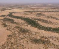 Une Grande Muraille verte pour arrêter le désert © Le Monde