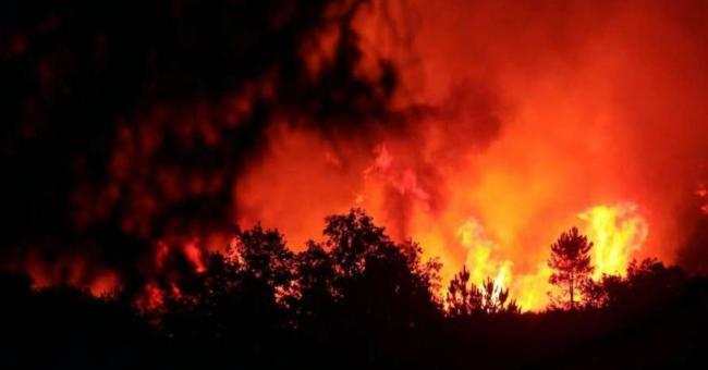 Vague de chaleur : bilan des incendies de forêt