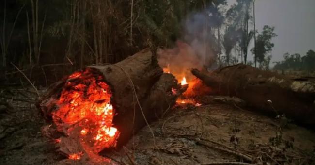 Incendies de forêt amazonienne
