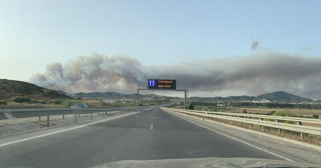 M'diq-Fnidek : un feu ravage 50 hectares de couvert forestier