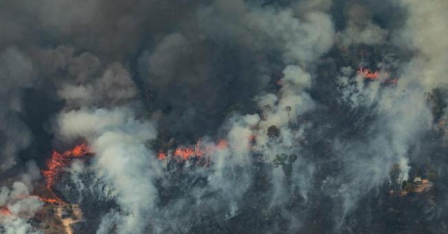 les cadavres de caïmans brûlé témoignent de l'ampleur des incendies
