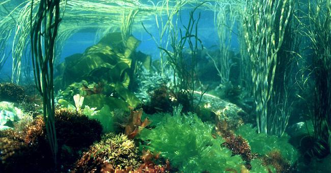 Pourquoi la demande mondiale d'algues marines augmente ?