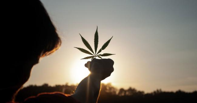 Dépénalisation du cannabis : le débat est officiellement lancé