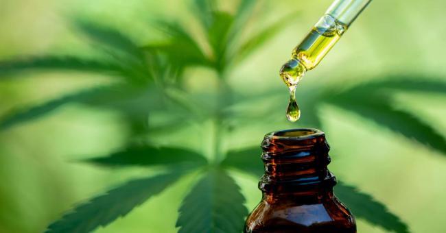 Cannabis : ce qu'il faut savoir sur le CBD
