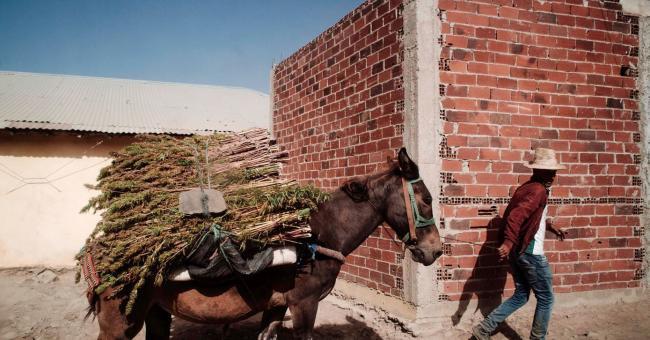 Une mule transport du cannabis à Bab Berred au Maroc © Louis Witter / Le Pictorium / Maxppp